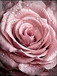 PINK DEWY ROSE Diamond Painting Kit Paint With Diamonds Kit